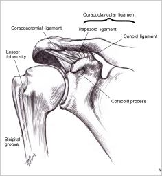 1-肩関節の骨格